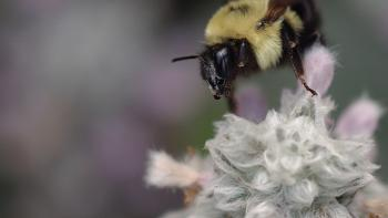 Jeremy Houchens, Photography, Bee