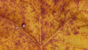 Jeremy Houchens, Photography, Fall Leaf
