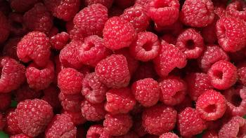 Jeremy Houchens, Photography, Raspberries